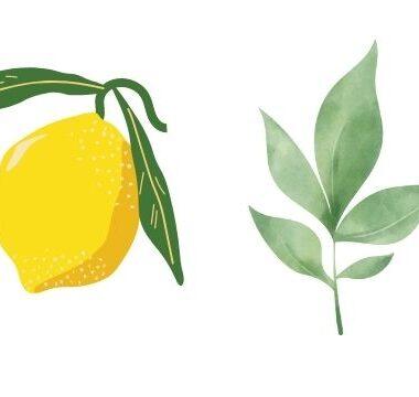 Recette écolo et économique pour entretenir sa cuisine – Facile et accessible
